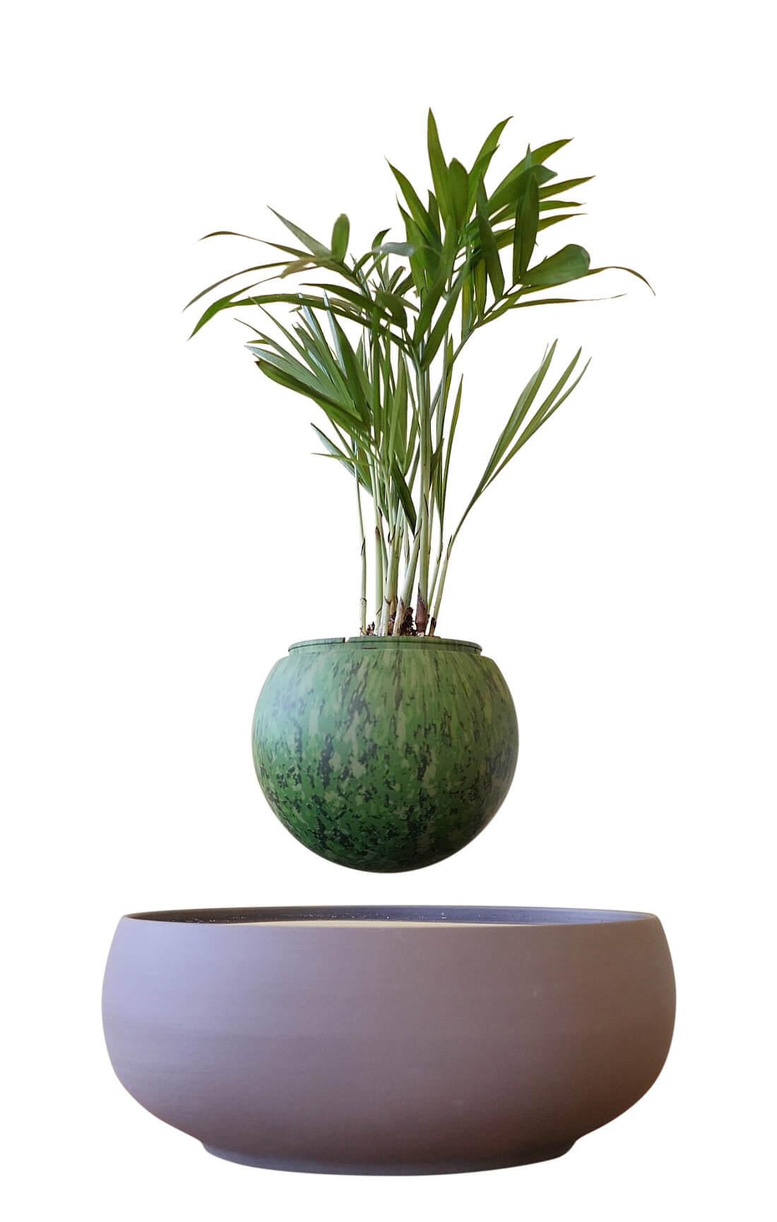 air bonsai interessiert jetzt endlich in europa. Black Bedroom Furniture Sets. Home Design Ideas